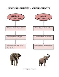 Picture of African Elephants vs Asian Elephants